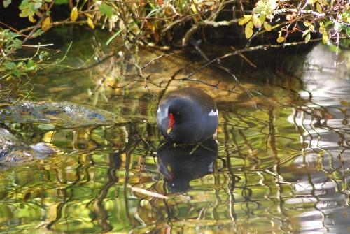 Wasservogelwelt