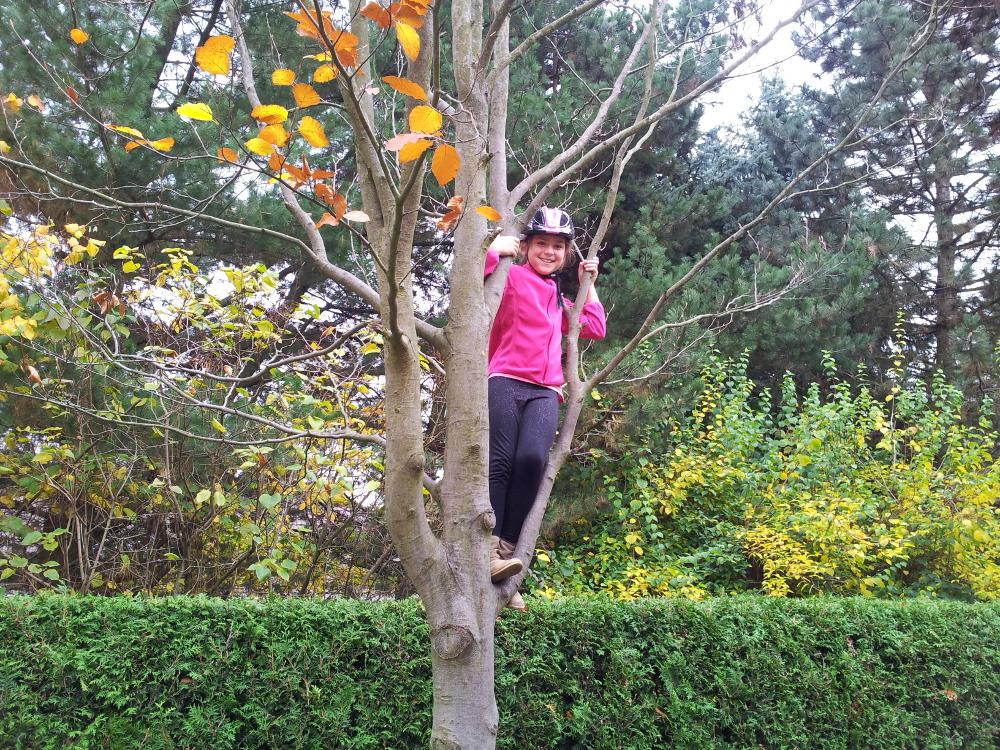 Lieblingsbaum von Vivien